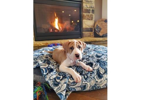 Missing 3months Old Puppy $350.00 reward